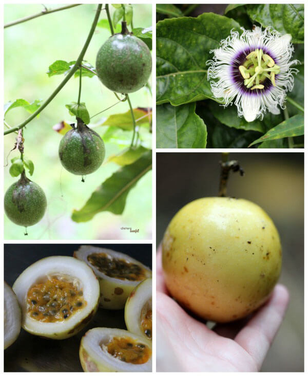 Passion Fruit on the vine, on the ground, and then cut up to process. from #DietersDownfall.com