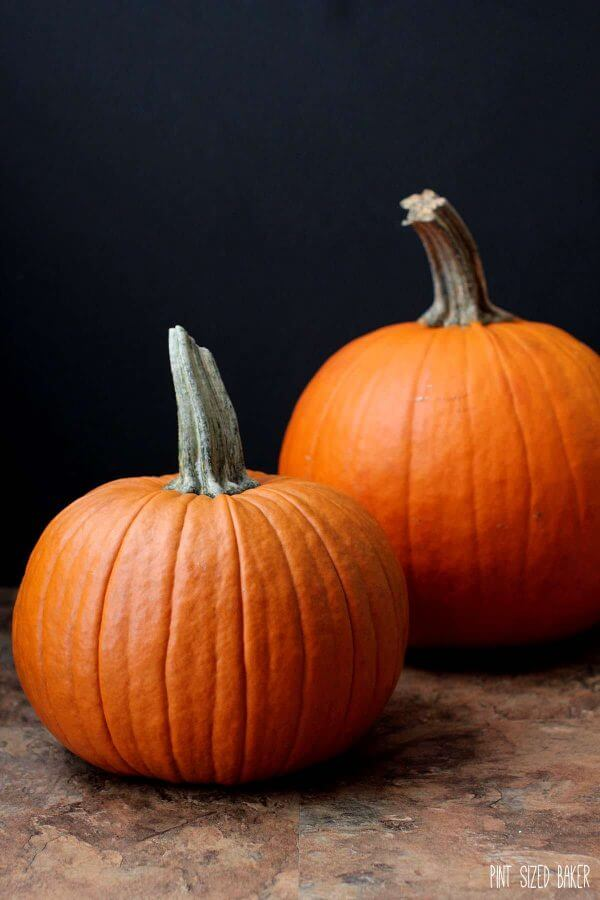 Look for sweet, baking Pumpkins in your grocery store. These make the best pumpkin puree for your pumpkin pies!