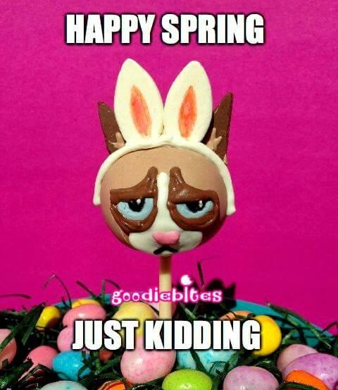 Grumpy Cat Easter Cake Pops