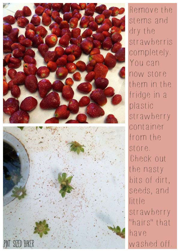 Planning on picking a ton of fresh strawberries this summer? Here's how I wash and prep them to keep all summer long!
