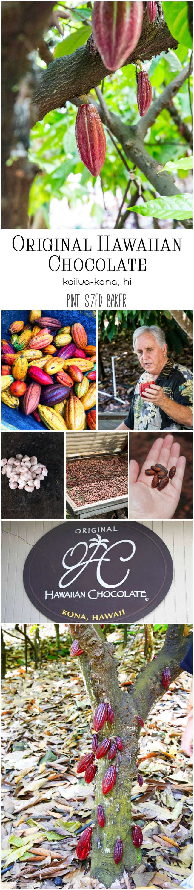 Ever see Cocoa Pods growing on a tree? It's a truly unique experience to explore the only chocolate farm in the United States. Take a leisurely afternoon to explore the Original Hawaiian Chocolate Plantation.