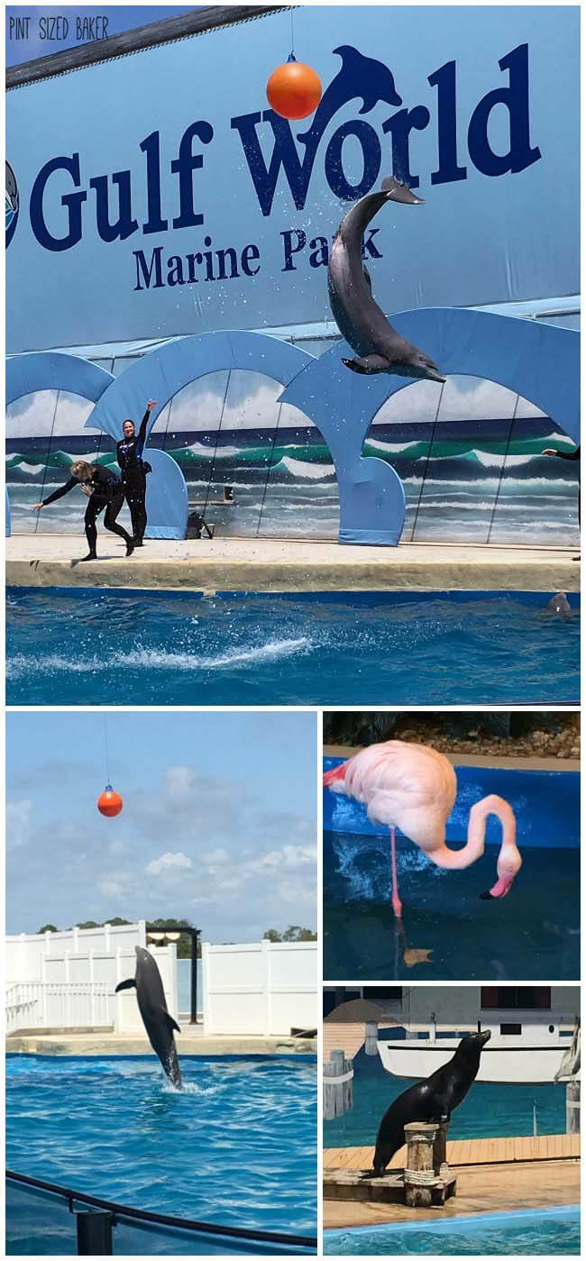 Gulf World in Panama City Florida is a great way to enjoy an afternoon with the kids while in Florida. Great Dolphin show and animal education.