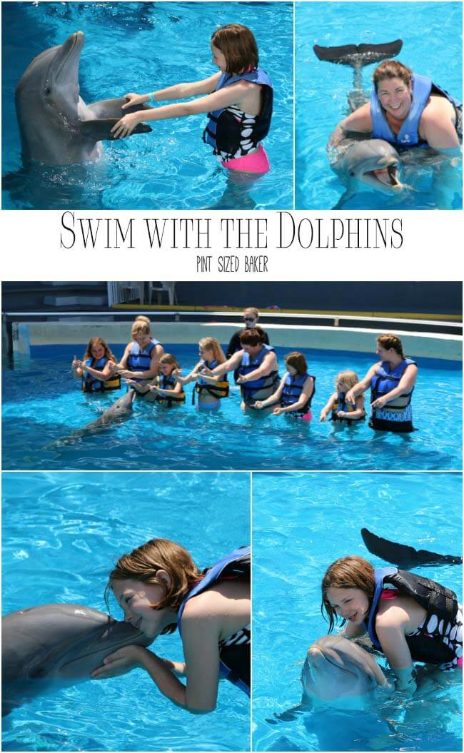 Swim with the Dolphins at Gulf World in Panama City Florida. It's lots of fun and a great experience for the kids!