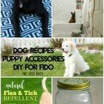 10 awesome Dog Recipes, Accessories, and DIY for you to make for your beloved Fido. My dog brings me so much happiness, and I try to make him just as happy!